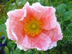 Pinkflowerinternet
