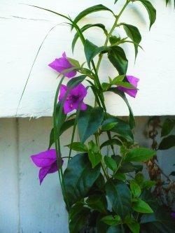 Purpleflowersinternet