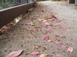 Fallen_red_leaves