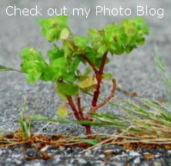 Photo_blog_button