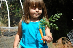 Yummy_carrots_int
