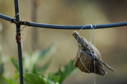 Mantiseggsack
